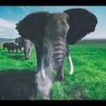 アフリカ象に囲まれてしまうVR動画 アフリカ象の豪快なクシャミも!
