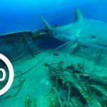 沈没船に巣食う大量のサメのVR動画 VR動物動画