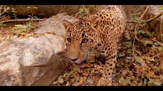 バイソンやグリズリーなど様々な動物のVR動画