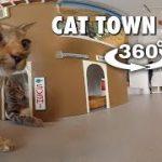 猫カフェの猫を観察できちゃうVR動画
