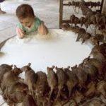 [閲覧注意]鳥やネズミやゴキブリが食事しているところを間近で観察できちゃうVR動画