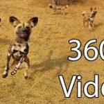 可愛い野生の犬達に囲まれちゃうVR動画