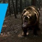 野生の熊さんに出会っちゃうVR動画