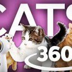 キッチンに居る猫を観察できちゃうVR動画