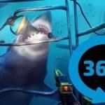 間近でサメを観察できちゃうVR動画